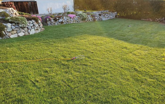 GartenbauSchiegl-Rollrasen